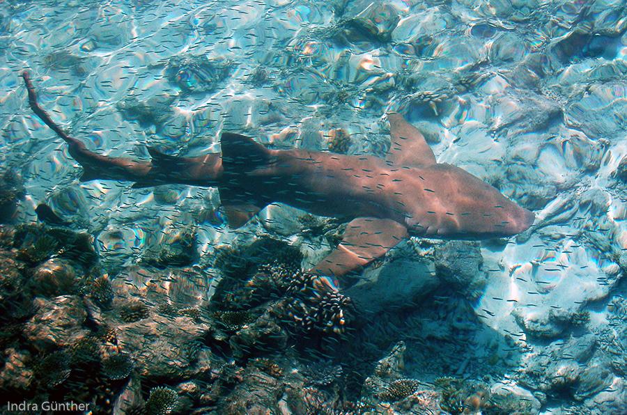 malediven felidhu atoll  dhiggiri 2015